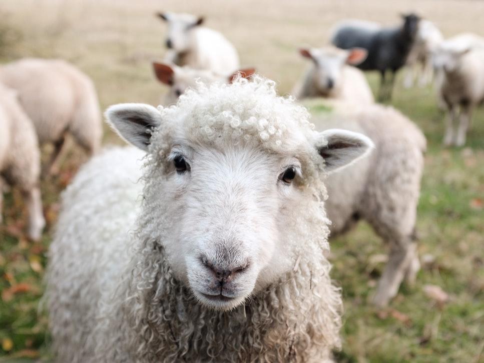 dia do veganismo