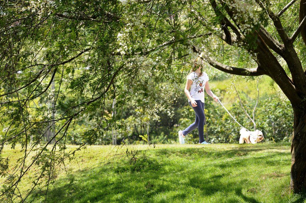 Foto que mostra em primeiro plano os galhos de uma árvore e ao fundo, em uma trilha mais elevada, uma moça passeando com um cãozinho.