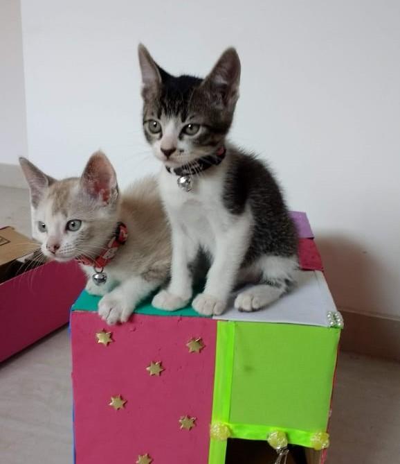 Os dois primeiros gatos que Joseane teve.