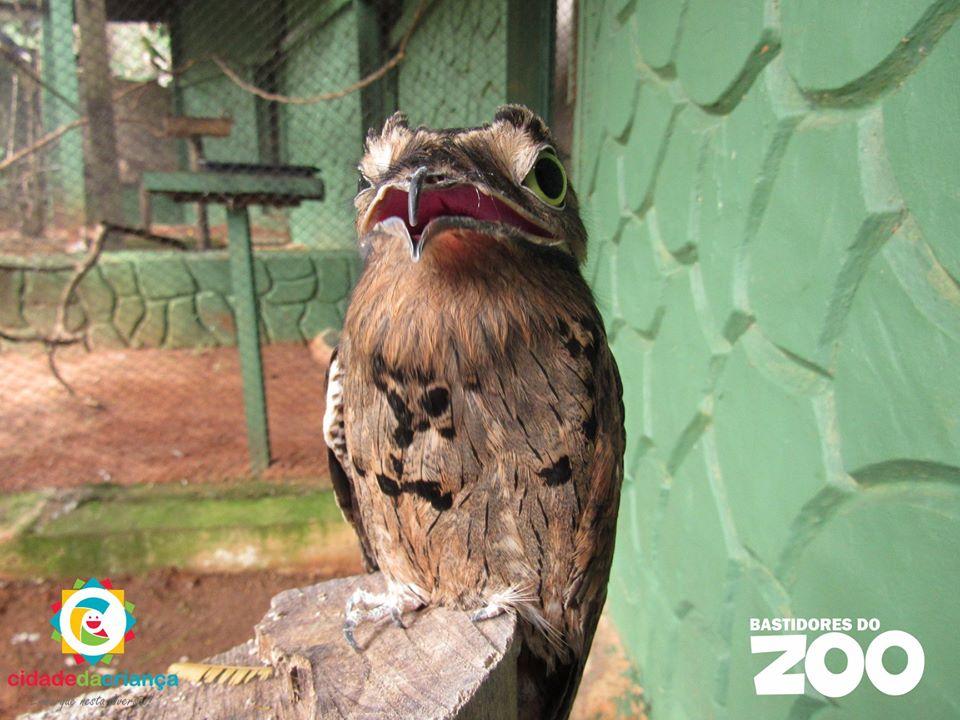 """Série """"Bastidores do Zoo"""" retrata a rotina dos animais que habitam na Cidade da Criança"""