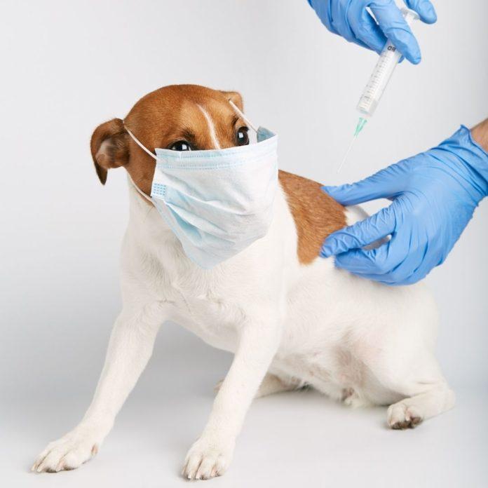 vacinar seu pet