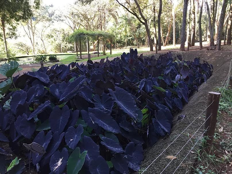 Jardim Botânico de Bauru: tanque de tratamento