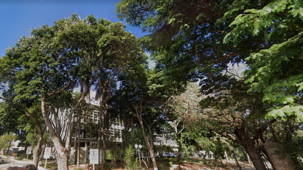 Árvores da Praça das Cerejeiras em Bauru